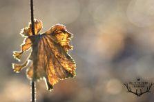 blad met gloed