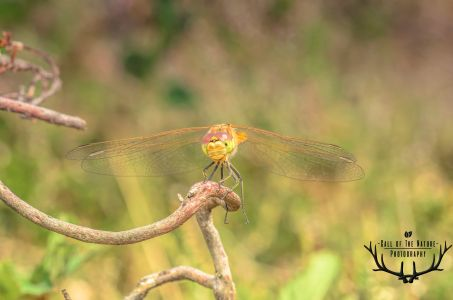 dragonflytak