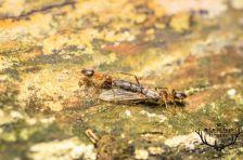 mieren op jacht